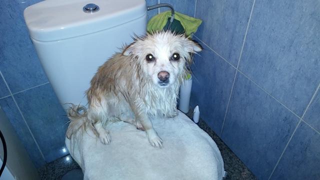 Primera ducha de Kiara.