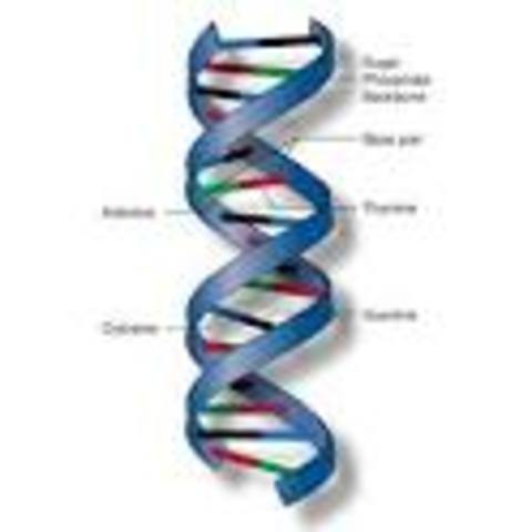 Molecular Advancement