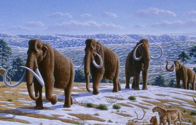 Mammals - 65 million years ago – Cenozoic era