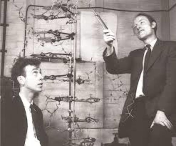 DNA Structure is released by James Watson and Francis Crick