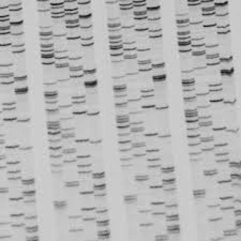 Rapid Sequencing of DNA