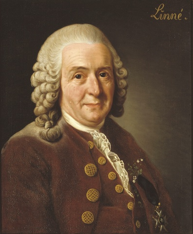 Carl von Linné dör