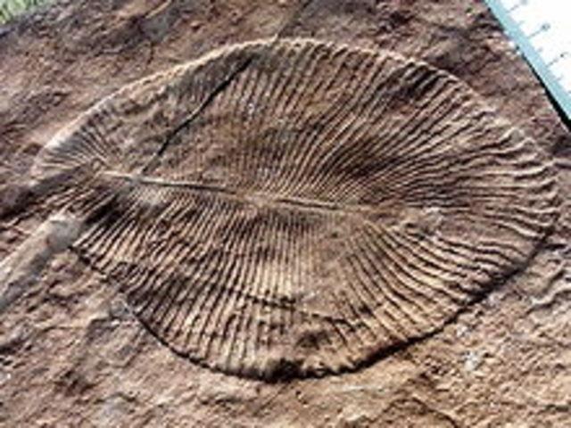 Proterozoico (2500Ma-500Ma)