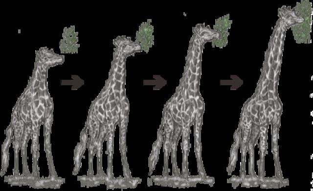 Teoría de Lamarck a las 23:59min 58 segundos y 56 milésimas