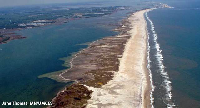 Formation of Barrier Islands (Picture URL): http://teachoceanscience.net/teaching_resources/education_modules/barrier_islands_and_sea_level_rise/get_started/