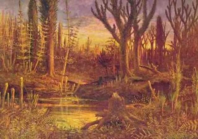 Aparición de las primeras plantas pluricelulares.
