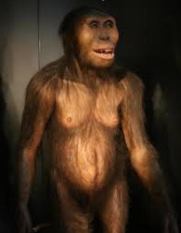 Aparición primeros bípedos: Australopithecus