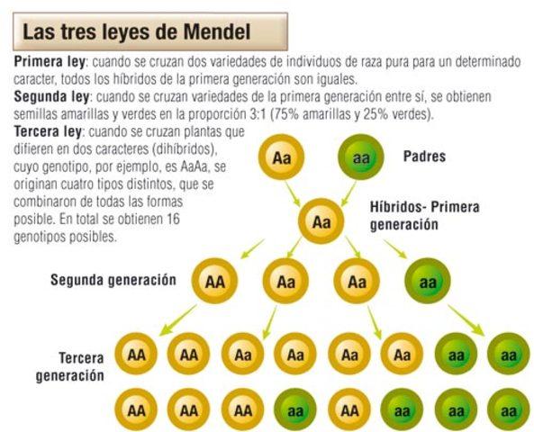 Leyes de Mendel a las 23 horas 59 minutos 58 segundos y 95 milésimas