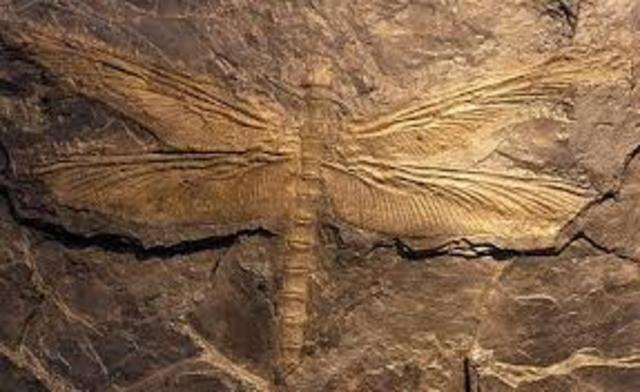 Extinción de Devónico Carbonifero (31 dias 3 horas 12 seg)