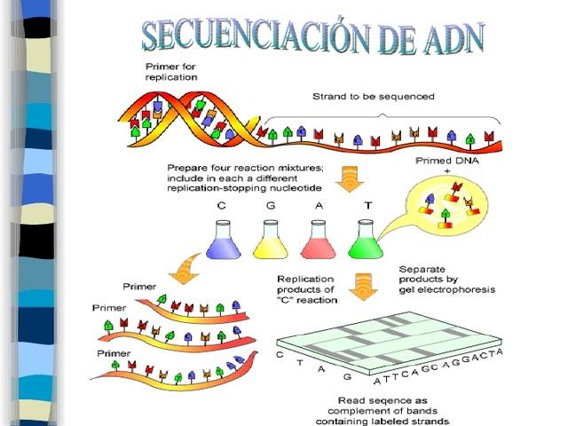 Primera secuenciación del DNA por Fred Sanger, Walter Gilbert y Allan Matan