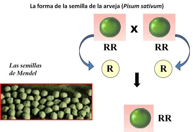 Publicación del artículo de Gregory Mendel Experimentos sobre hibridación de plantas.