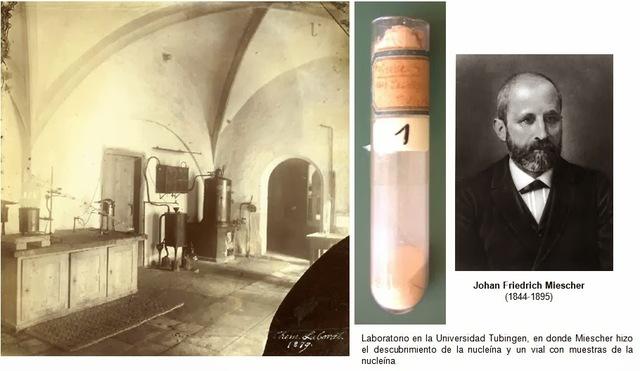 Friedrich Miescher descubre lo que hoy se conoce como ADN.