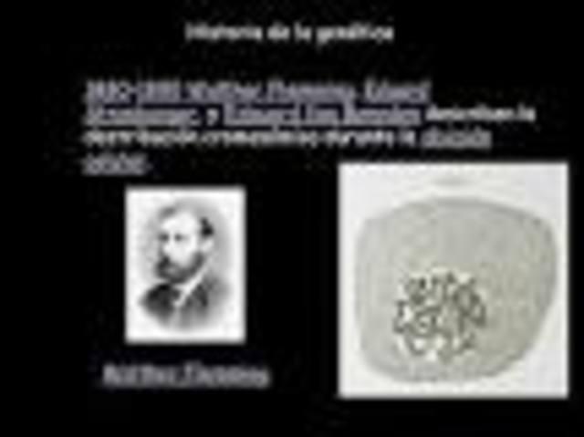 Walther Flemming, Eduard Strasburger, y Edouard Van Beneden describen la distribución cromosómica durante la división celular.