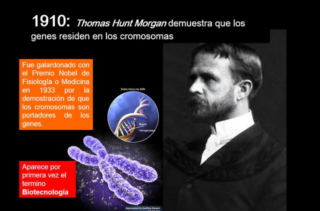 Thomas Hunt Morgan demuestra que los genes residen en los cromosomas.