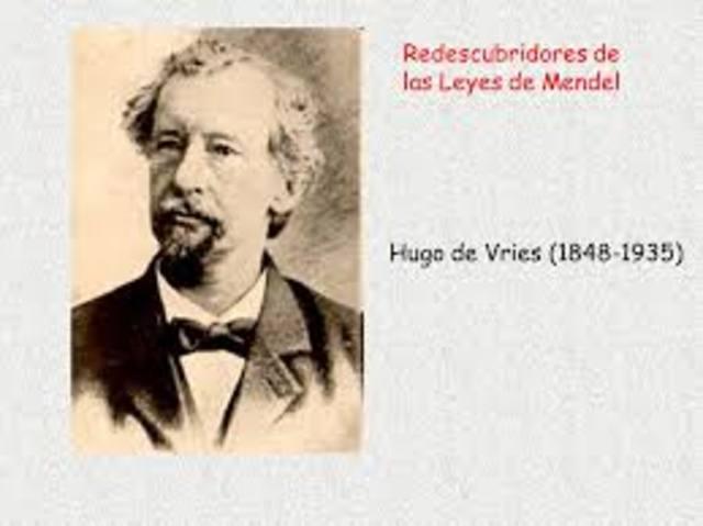 El genetista holandés Hugo De Vries (1848-1935), en colaboración con otros investigadores, «redescubrieron» los hallazgos de Mendel: