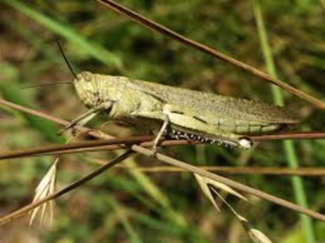 February 2033: The Locusts