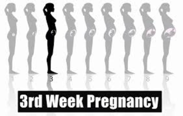 Week 3 of pregnancy