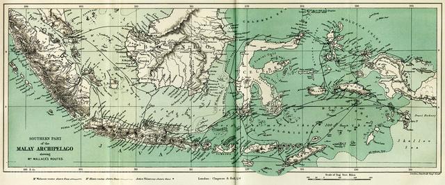 Wallace recorrió el archipiélago malayo y las Indias Orientales, para recoger muestras para la venta y para estudiar la historia natural.