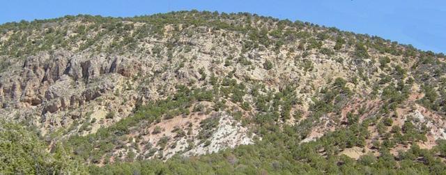 Kaibab Limestone (Upper Permian)