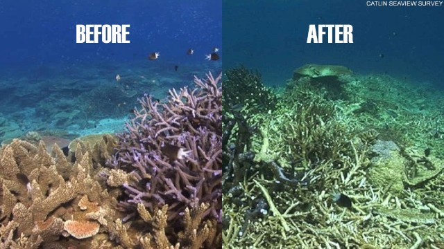 Coral Bleaching Level of Destruction