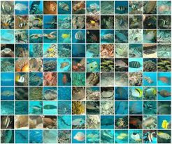 Eukaryotic Species