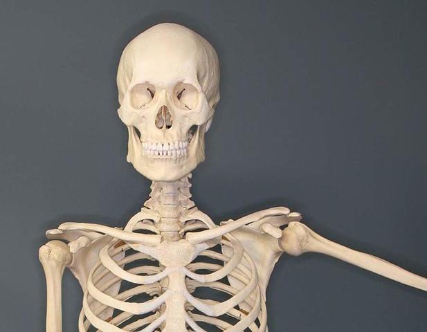 Bone mass peaks