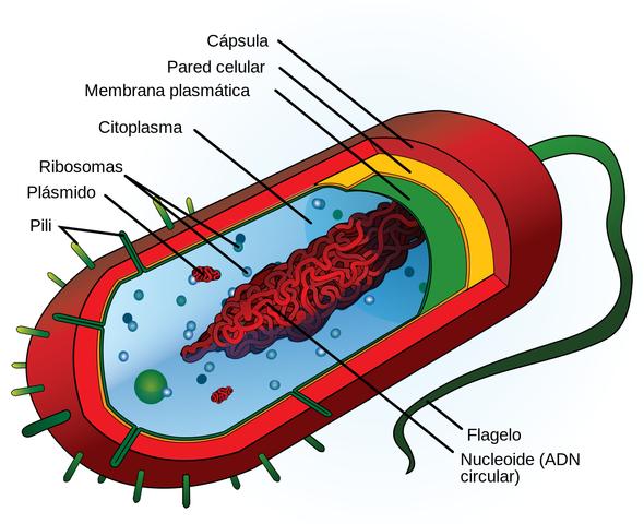 Primeras células eucariotas (algas).