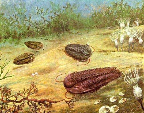 Comienzo de la era Primaria o Paleozoico. Abundancia de organismos marinos con esqueleto.