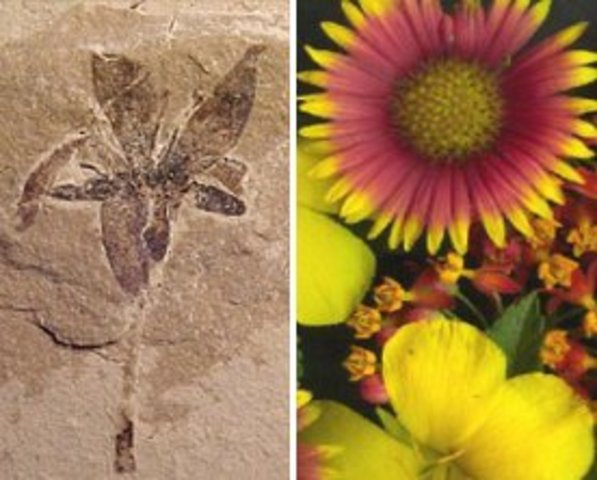Primeras plantas con flores.