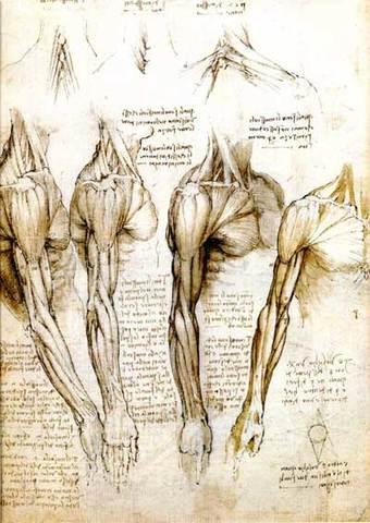Pre-Animation: Leonardo Da Vinci's Drawings of Anatomy