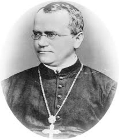 Mendel Gregor