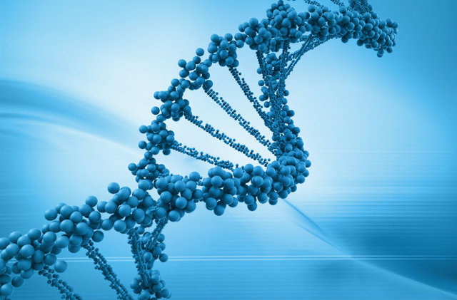 DNA MATERIAL GENETICO