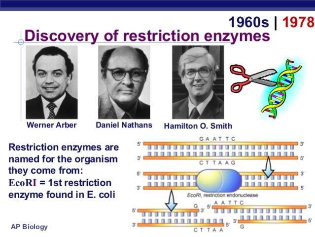 Los enzimas de restricción.