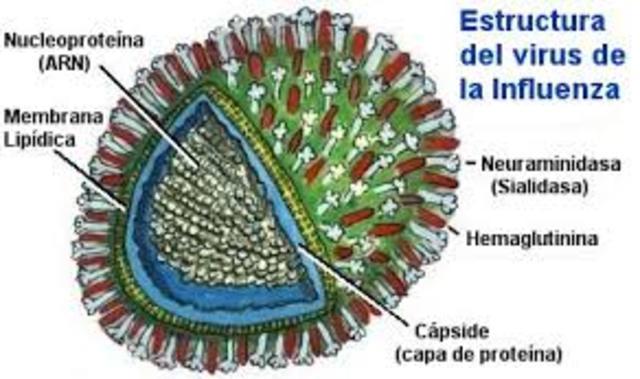 APARICION AH1N1
