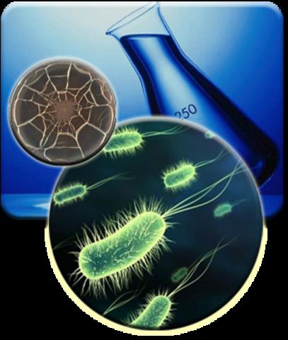 Howard Taylor Ricketts demuestra que la fiebre de las Montañas Rocosas es transmitida por garrapatas, y aisló el microorganismo causante de la enfermedad (que él llamó rickettsia). Falleció por esa enfermedad.