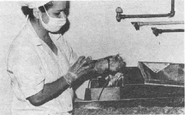Salmon y Smith (1886) perfeccionaron los métodos serológicos de Pasteur, lo que les permitió producir y conservar más fácilmente sueros tipificados contra la peste porcina.