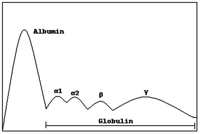 Bruton Gammaglobulinas