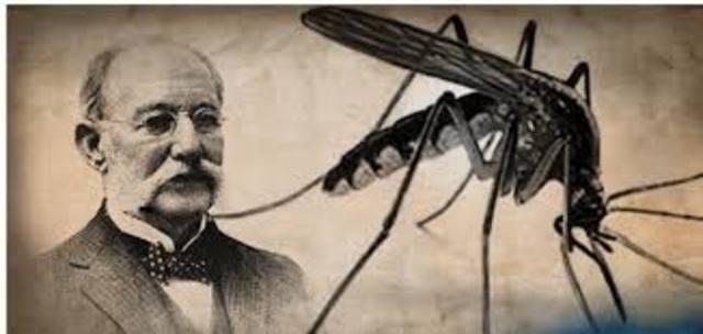 fiebre amarilla es transmitida por mosquitos.Carlos Finlay