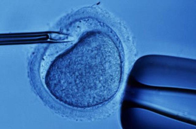 Ovulos humanos fecundados en probetas
