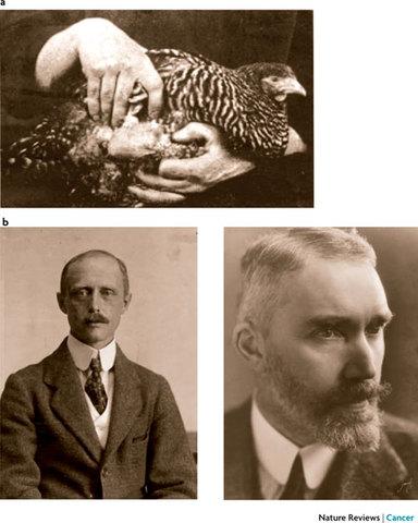 Virus (retrovirus) que produce tumores (sarcomas). Francis Peyton