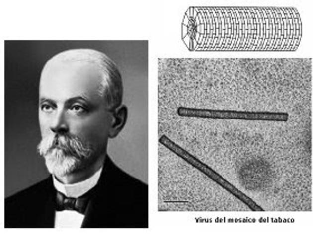 mosaico del tabaco producido por un virus