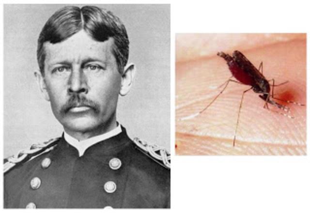 confirmacion de la fiebre amarilla transmitida por un mosquito