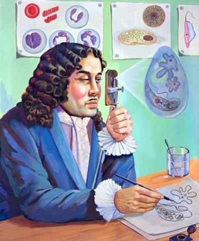 Van Leeuwenhoek: DESCRIBE POR PRIMERA VEZ UNA BACTERIA