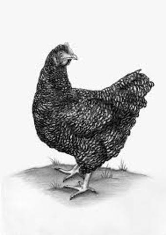 descubrimiento del virus que produce tumores en pollos
