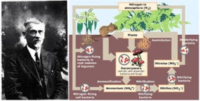 S. Winogradsky: primeros estudios sobre efectos geoquímicos producidos por bacterias.