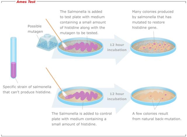 test bacteriano para detectar mutagenos