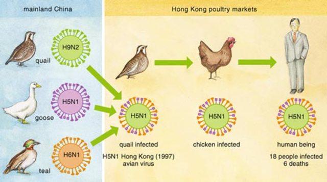 aparece la gripe aviar por primera vez