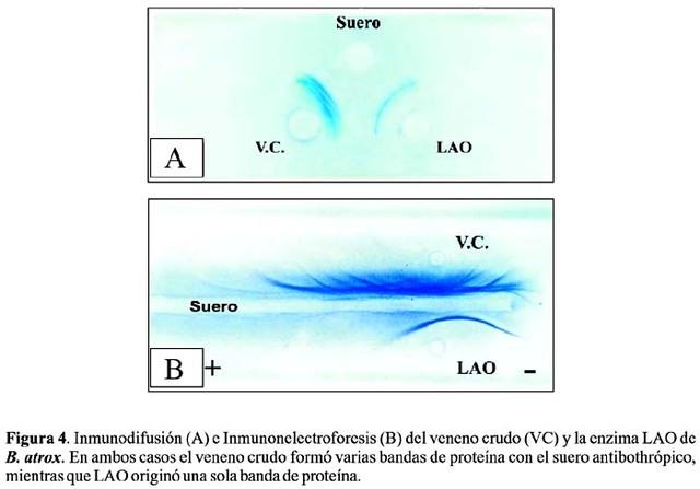 pierre grabar , c a williams conciben la imunoelectroforesis y establecen la heterogeneidad de las inmunoglobulinas