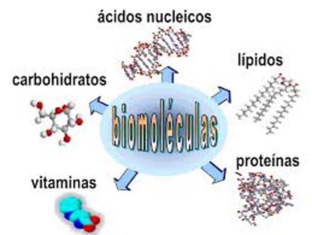 Clasificación moderna de las biomoléculas
