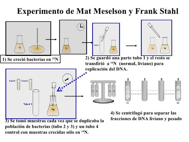 experimento de Meselson-Stahl